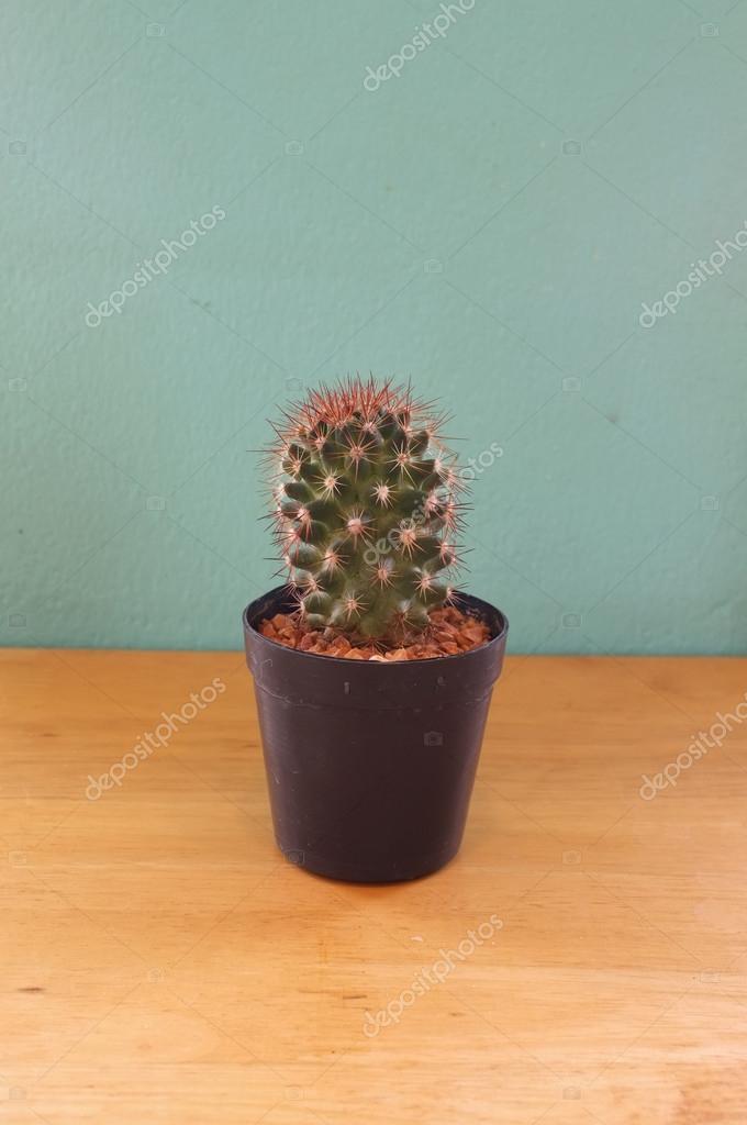 Maly Kaktus W Doniczce Zdjecie Stockowe C Hepjam Hotmail