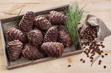 Branch cedar cones and nuts.