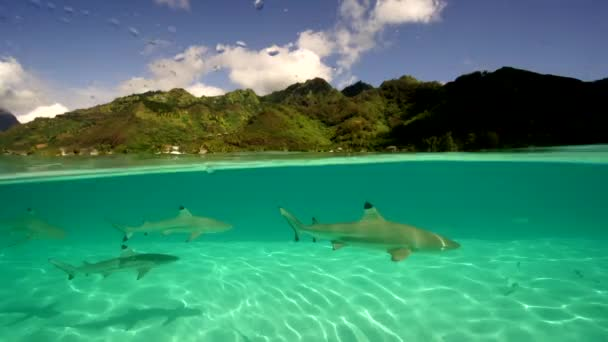 Sharks and rays in water
