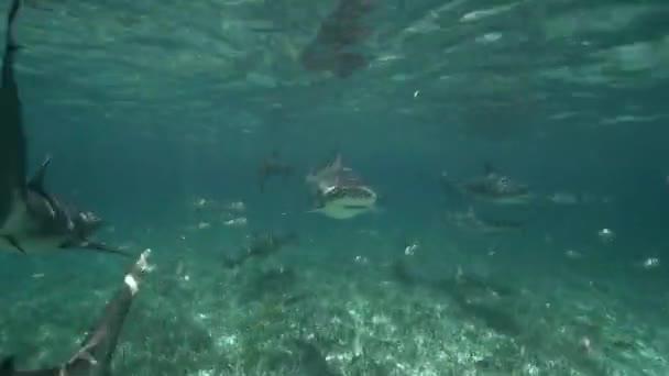 Dozens of sharks swimming