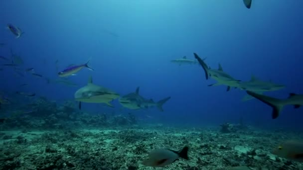 Caribbean sharks and fish