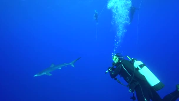 shark with scuba divers