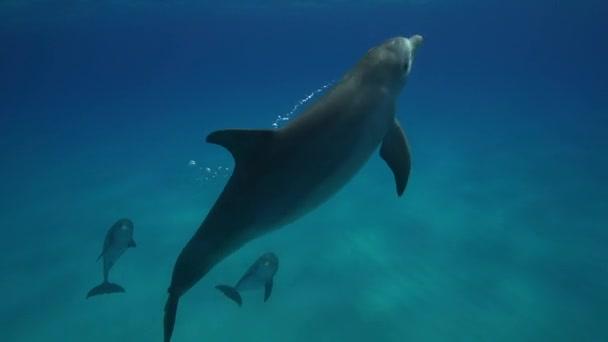 A tiszta vizű delfinek