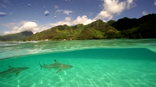 sharks and rays in shallow water