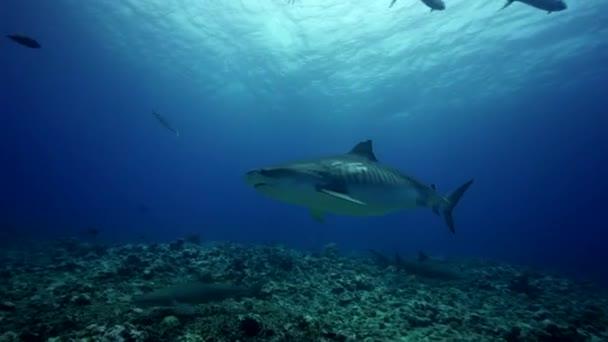 Karibische Haie und Fische