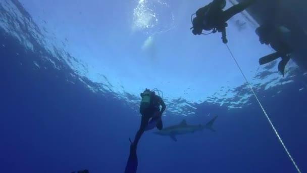 A búvárok kék cápa