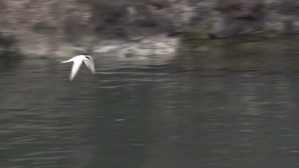 Gabbiano in volo sotto Oceano