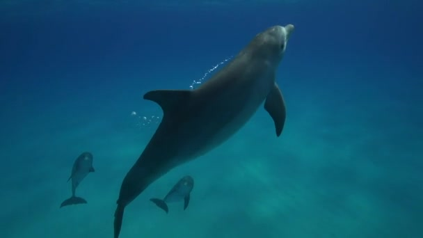Delfíni v čistých vodách
