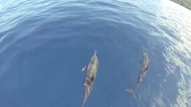 Skupina delfínů, číselník