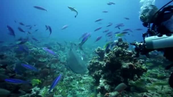Karibská útes žraloků
