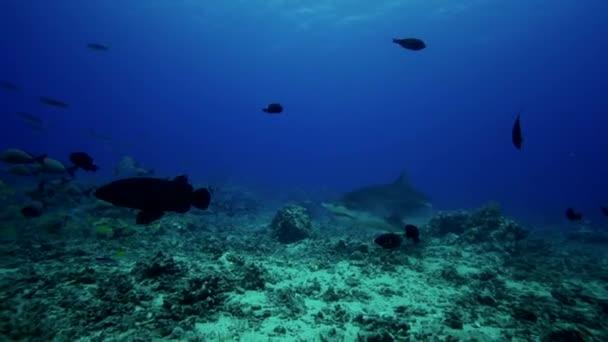 Karibská žraloků a ryby