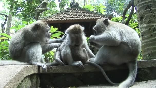 dlouhý ocas makaků péče
