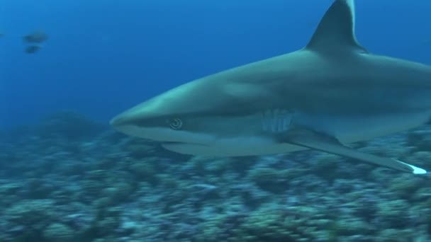 Silvertip cápa megközelítések kamera, közelről