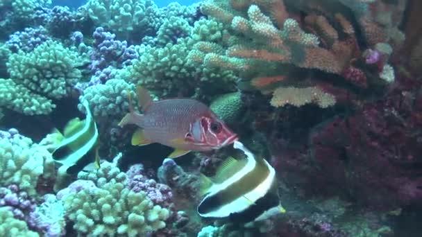 veverka ryby s hlavičkou ryby na útesu