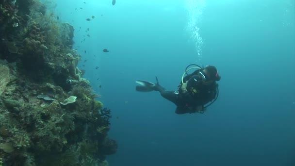 diver swimming near the corals