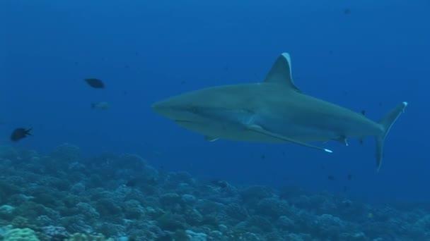 Silvertip cápa előtt halad a kamera