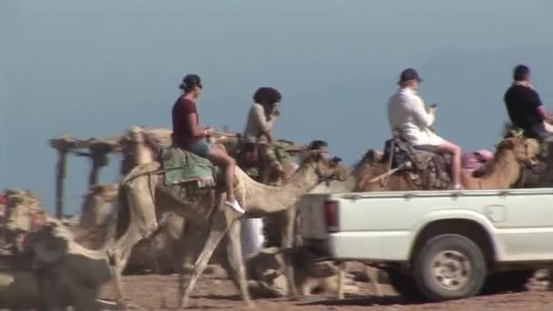 tourists riding camels