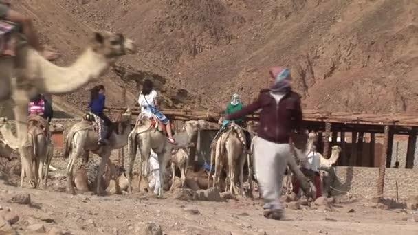 turisté s velbloudy v poušti