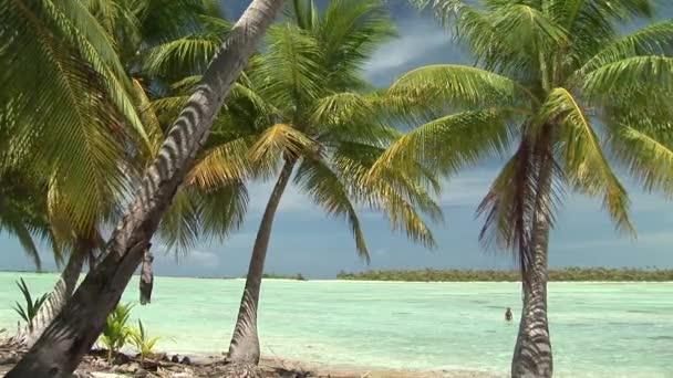 scintille di acqua blu con le palme