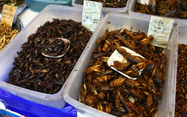 Fried insects on sale in Chiang Mai