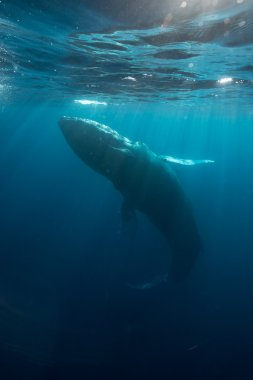 Humpback and Sunlight Underwater