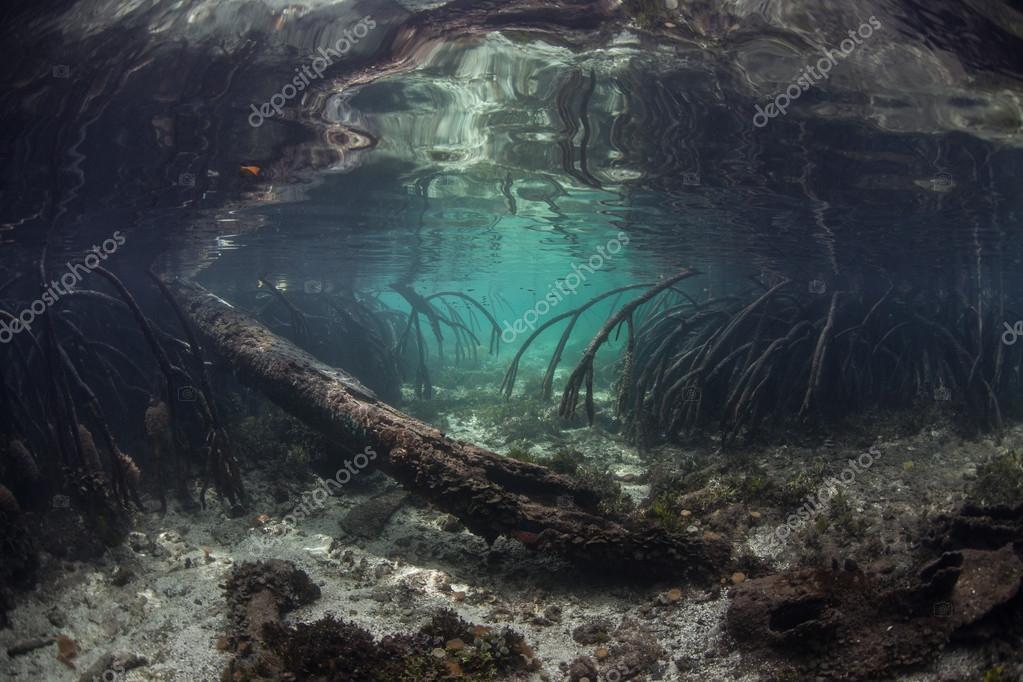 Corals and Remote Island