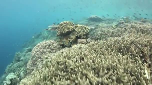 Diversity of fish and marine invertebrates in coral reef