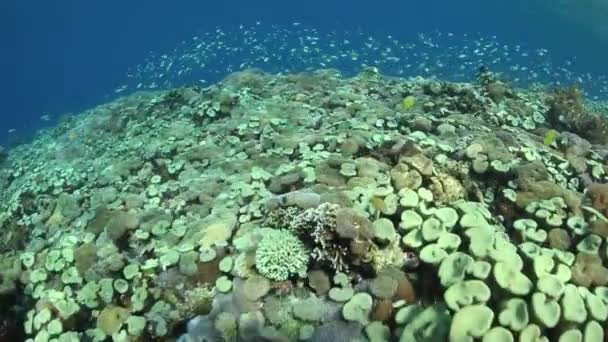Zdravá a rozmanitá korálový útes