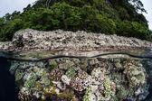 Rozmanité korálový útes roste v mělčinách laguny