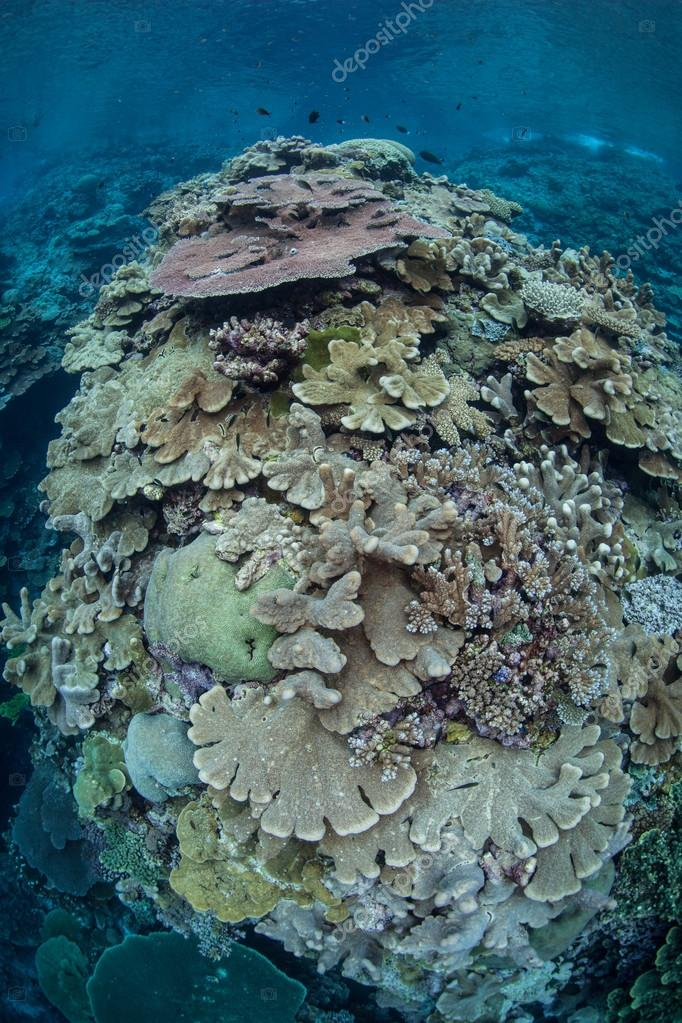 healthy coral reef grows in shallow water