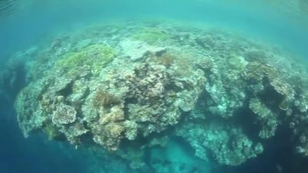 Mělký korálový útes v Raja Ampat, Indonésie