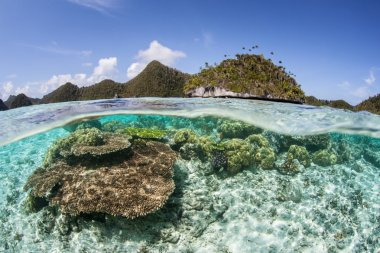 Coral Reef and Limestone Islands in Raja Ampat