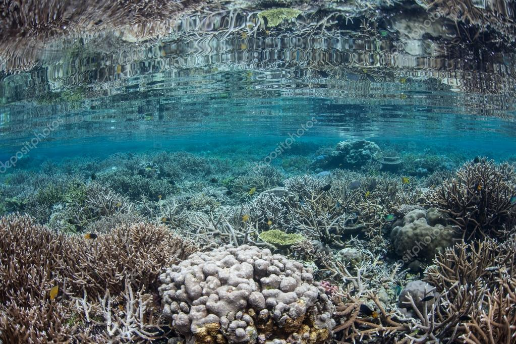Corals grow in Raja Ampat