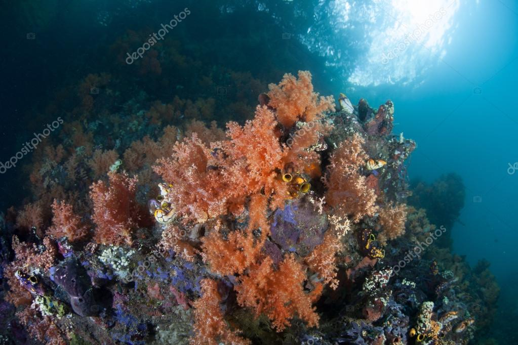 Colorful Soft Corals in Raja Ampat, Indonesia