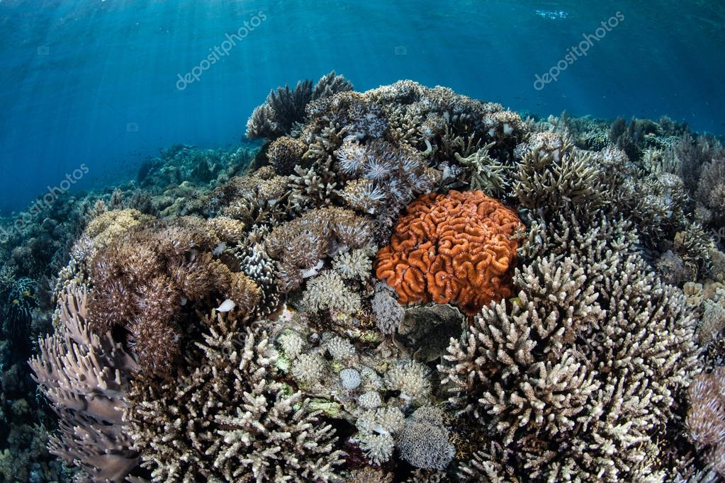 Vibrant Corals Growing in Komodo National Park, Indonesia