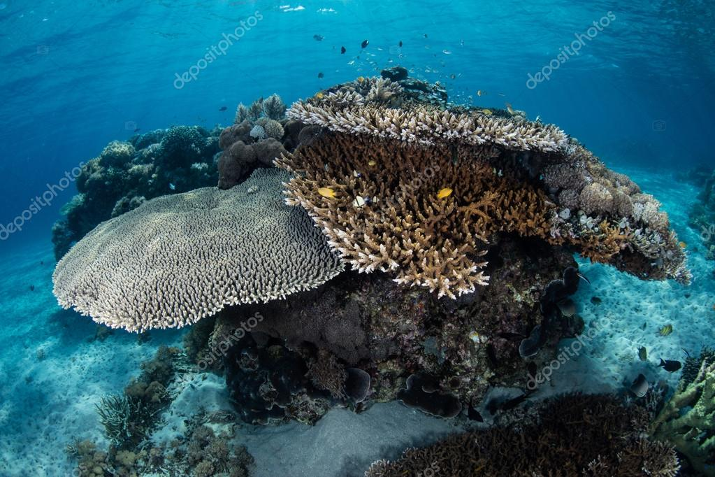 Corals and Fish in Komodo National Park