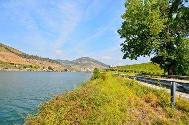 Douro Valley: Riverside and vineyards near Peso da Regua, Portugal
