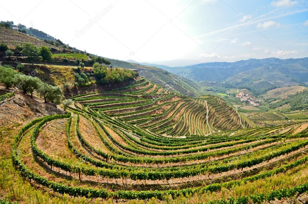 Douro Valley: Vineyards near Duero river and Pinhao, Portugal