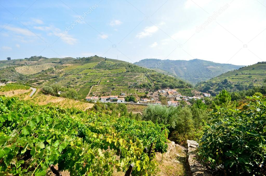 Douro Valley: Vineyards and small village near Peso da Regua, Portugal
