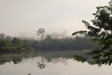 Amazon rainforest: Landscape along the shore of Amazon River near Manaus, Brazil South America
