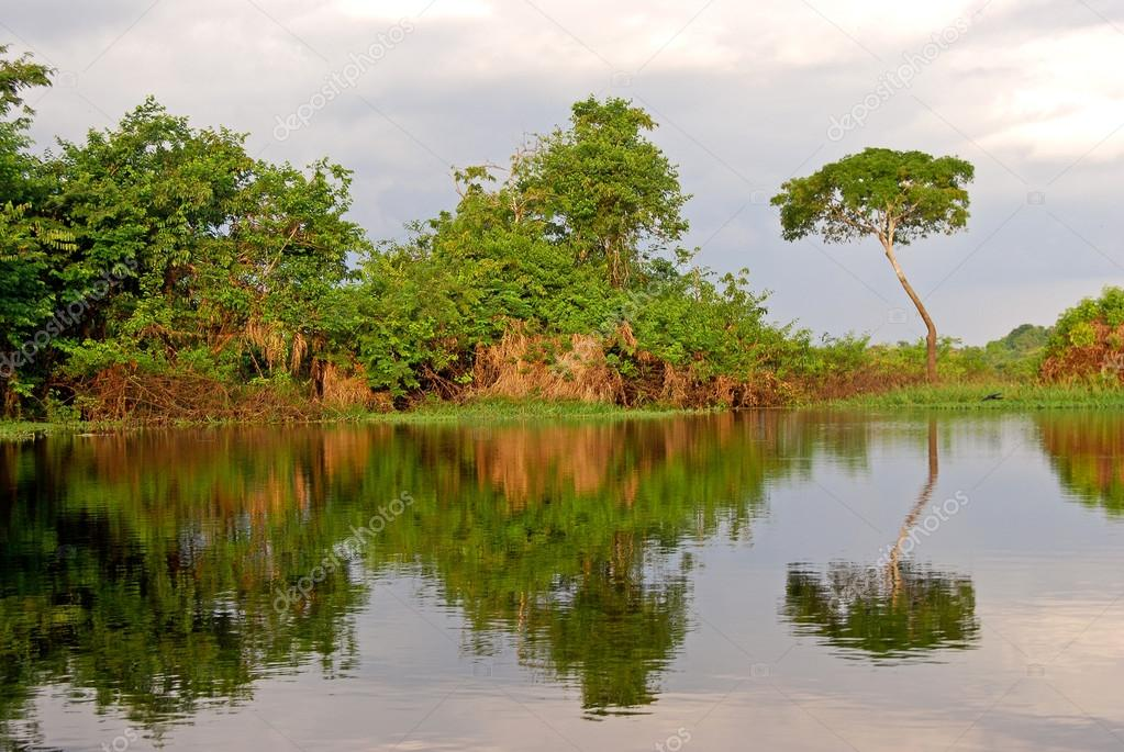 Amazon rainforest: Landscape along the shore of Amazon River near Manaus, Brazil South America