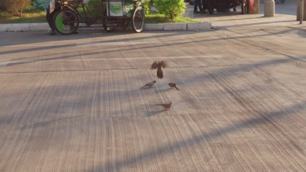 Bangkok, Thajsko - 12. ledna 2021 - Ptáci na ulici v Bangkoku