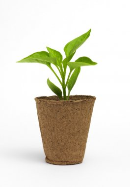 potted with plant isolated