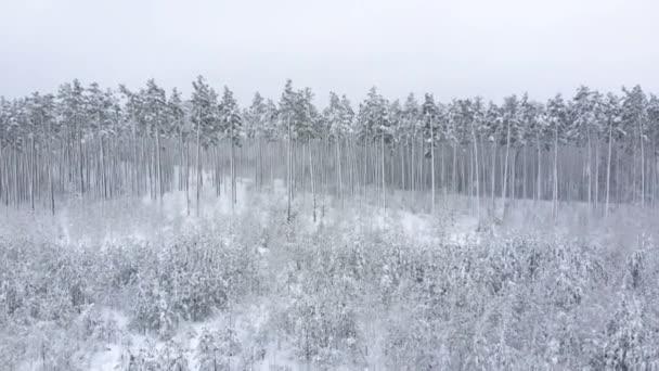 Mladý zimní les v popředí. Letecký pohled.
