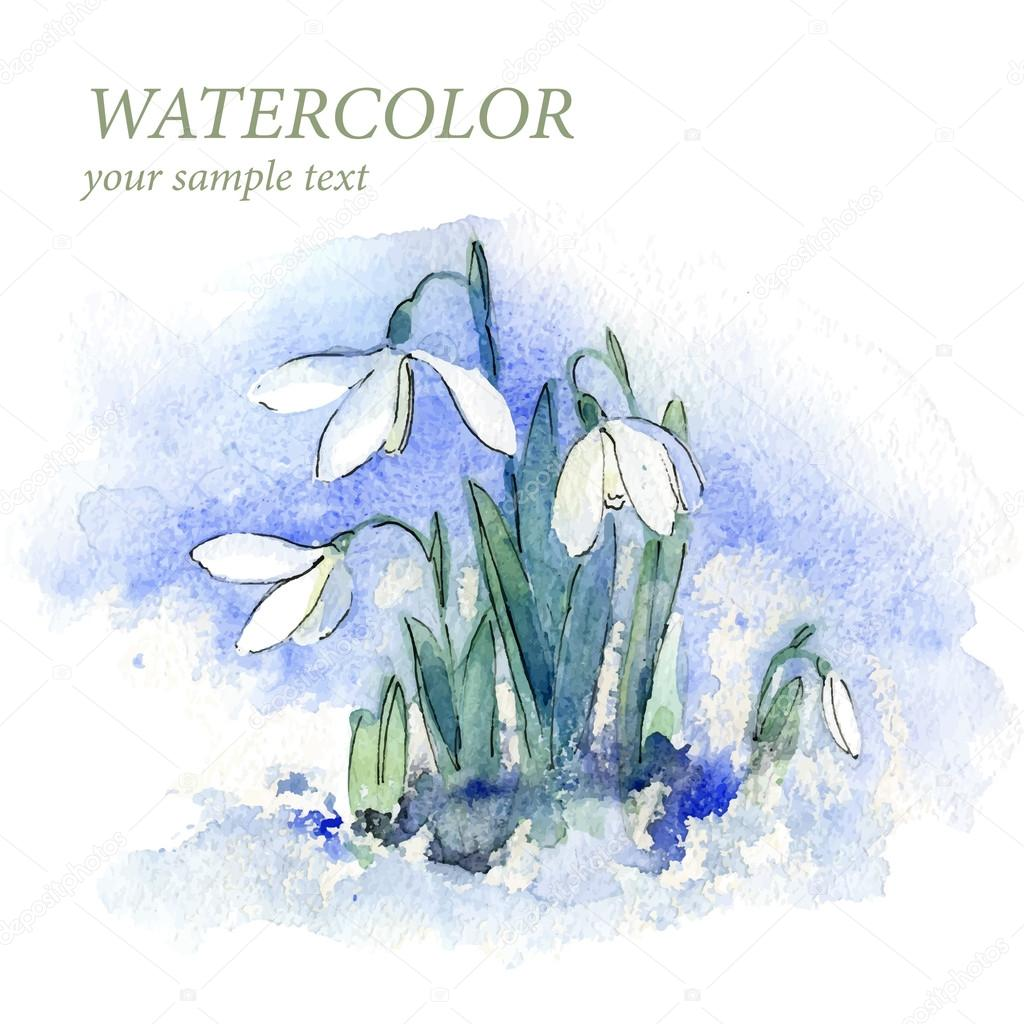 Spring snowdrop flowers with snow in the forest Watercolor. Vector. Background