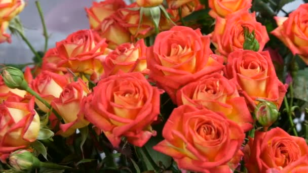 Beautiful bouquet of orange-red rose buds. Roses in a vase in the room
