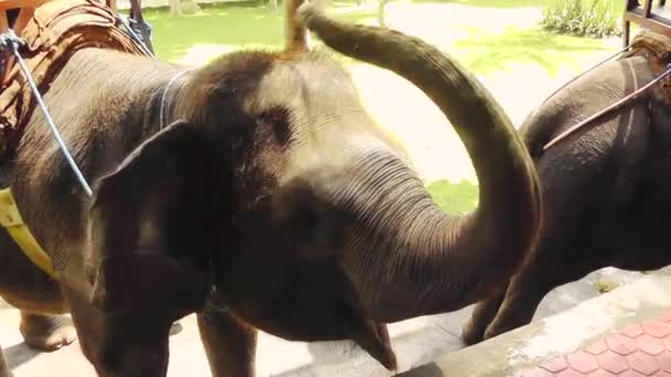 Elefánt, elefánt Bakas túra, Bali