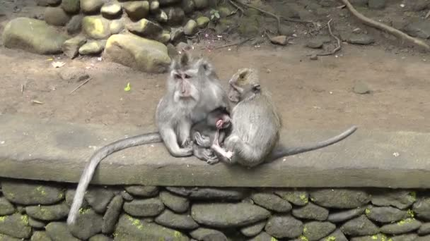 Monkey family,Ubud Monkey Forest,Bali