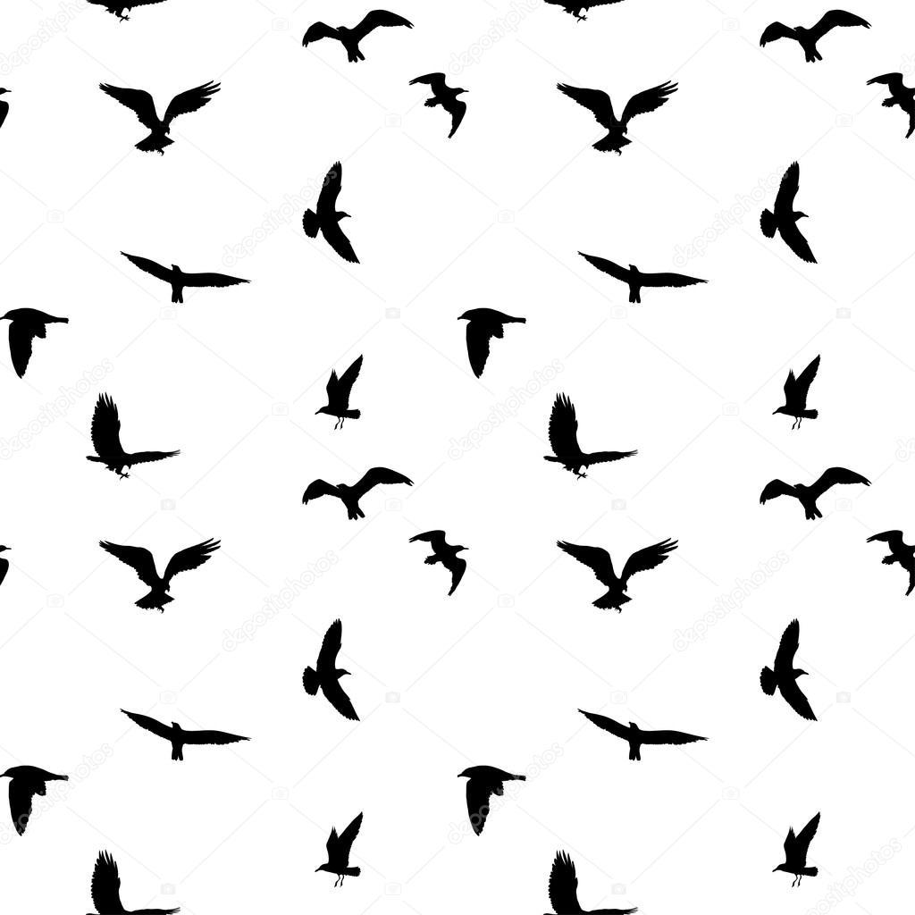 Fondo: aves | Patrón sin fisuras de volar aves siluetas sobre fondo ...