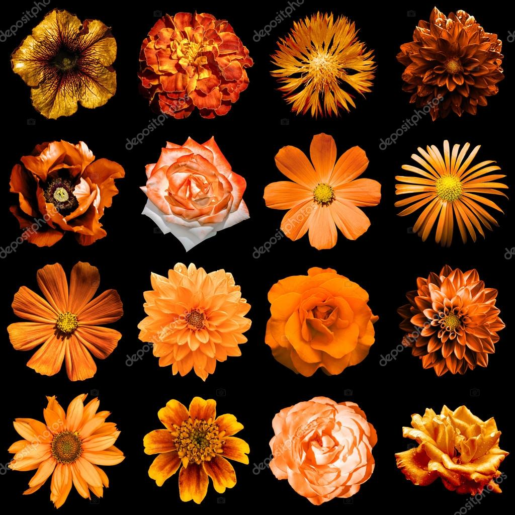 Mix collage of natural and surreal orange flowers 16 in 1 peony mix collage of natural and surreal orange flowers 16 in 1 peony dahlia primula aster daisy rose gerbera clove chrysanthemum cornflower flax izmirmasajfo Image collections